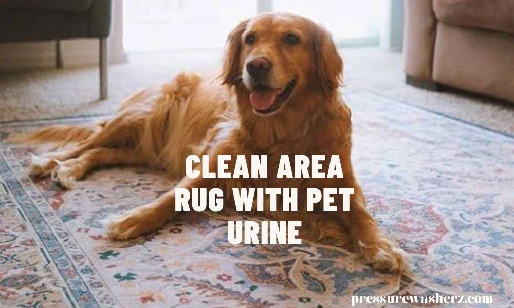 A guide for area rug cleaning with pet urine